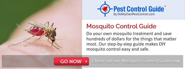 Mosquito Pest Guide