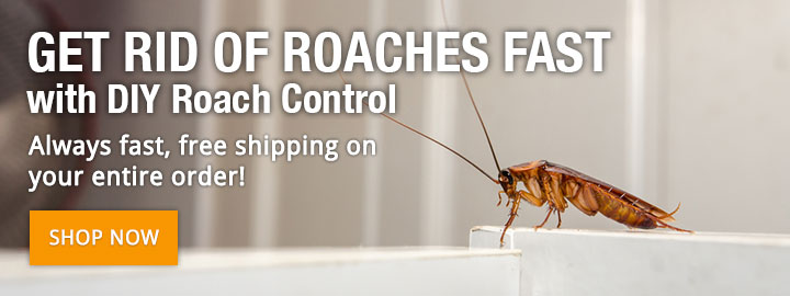 Get Rid of Roaches Fast with DIY Roach Control