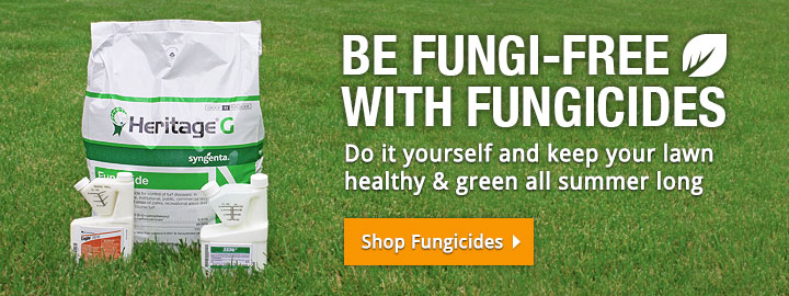 Be Fungi-Free with Fungicides!