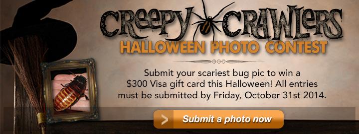 2014 Creepy Crawlers Halloween Bug Photo Contest