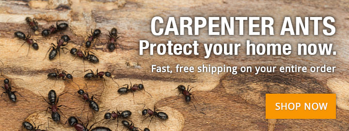 CARPENTER ANTS: Protect your home now!