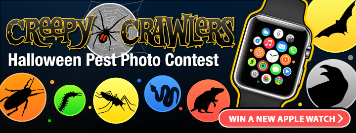 Creepy Crawlers Contest of 2016!