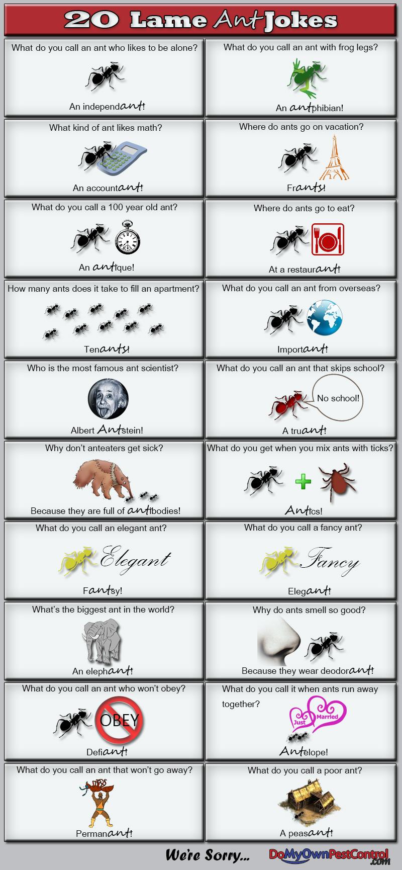 Ant Jokes Amp Ant Puns Do My Own Pest Control