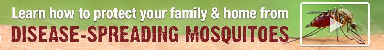 Disease-Spreading Mosquitoes