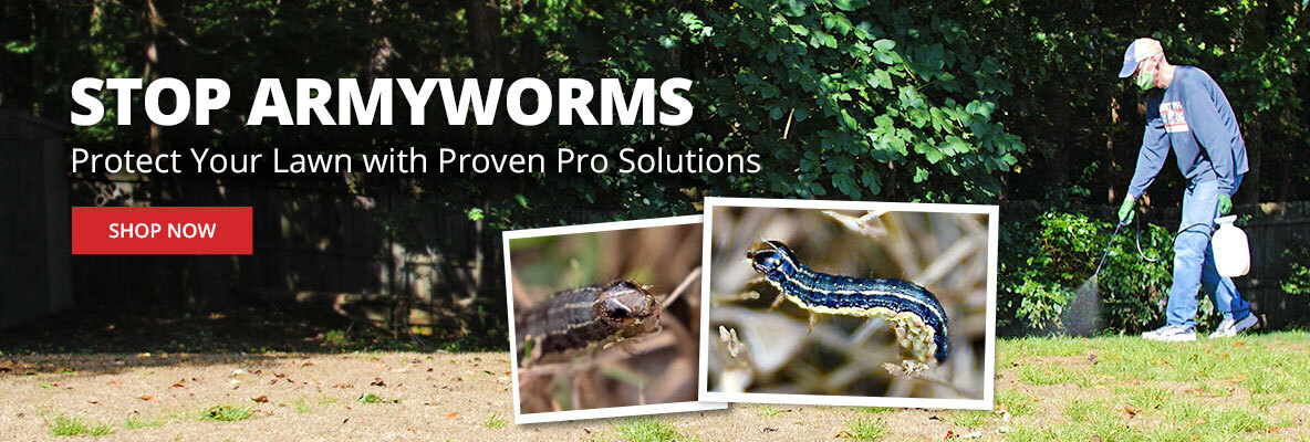 Stop Armyworms -Protect your lawn with proven pro solutions