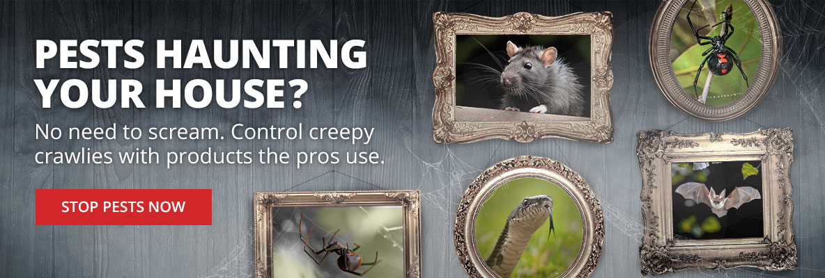Control creepy crawlies with spooky pest control at DoMyOwn.com