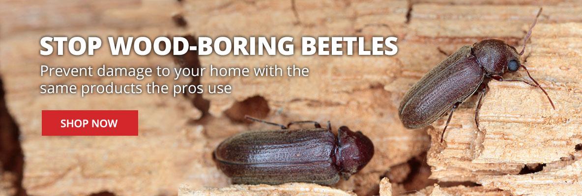 Get Rid of Wood-Boring Beetles