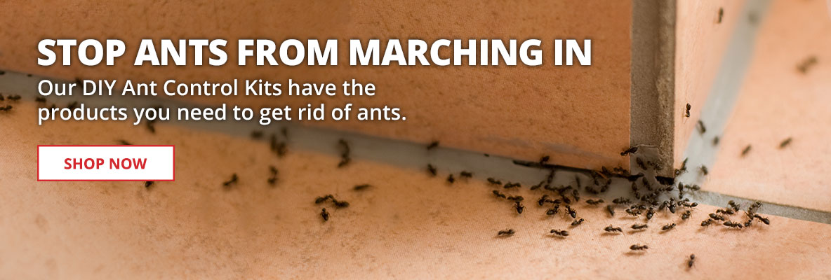 Get Rid of Ants Fast with DIY kits and professional grade products