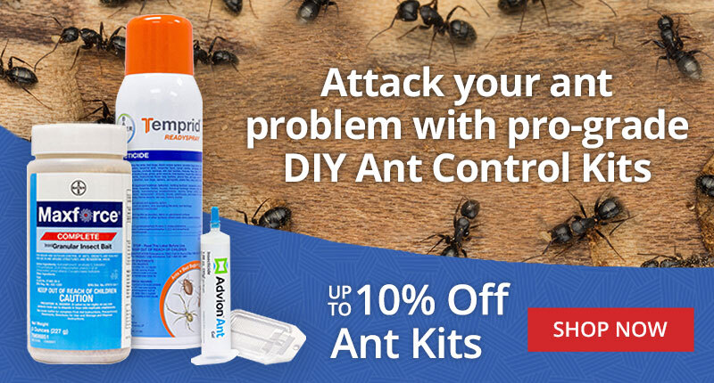 DIY Ant Control Kits -up to 10% off Ant Kits - Shop Now