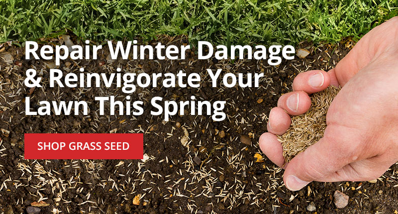 Repair and reinvigorate your lawn this Spring -Shop Grass Seed