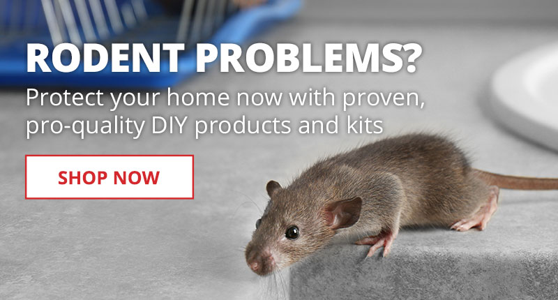 Protect your home from rodents with pro-quality DIY products and kits