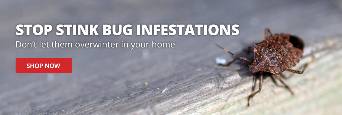 Stop Stink Bugs - Don't Let Them Overwinter in Your Home