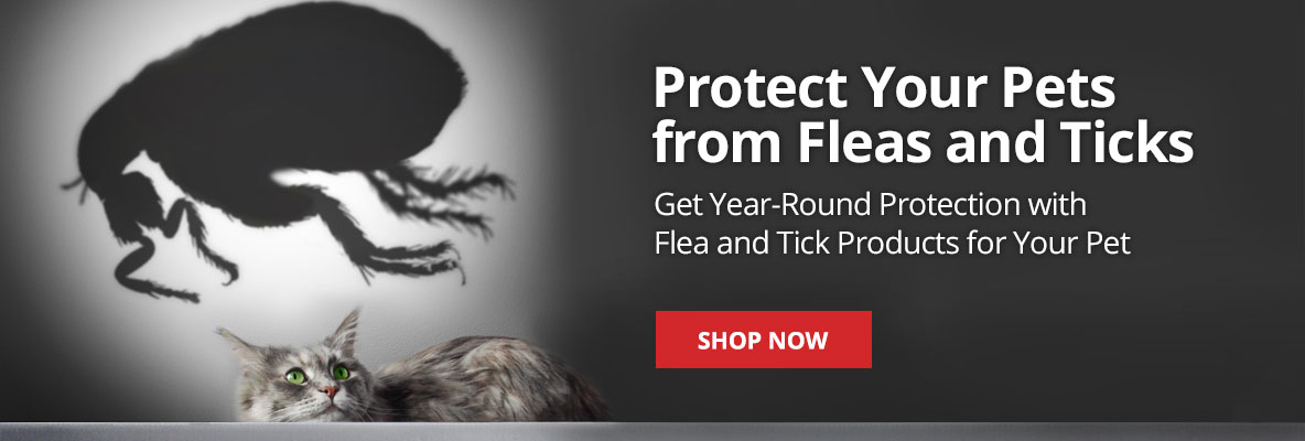 Get year-round protection with flea and tick products for your pet