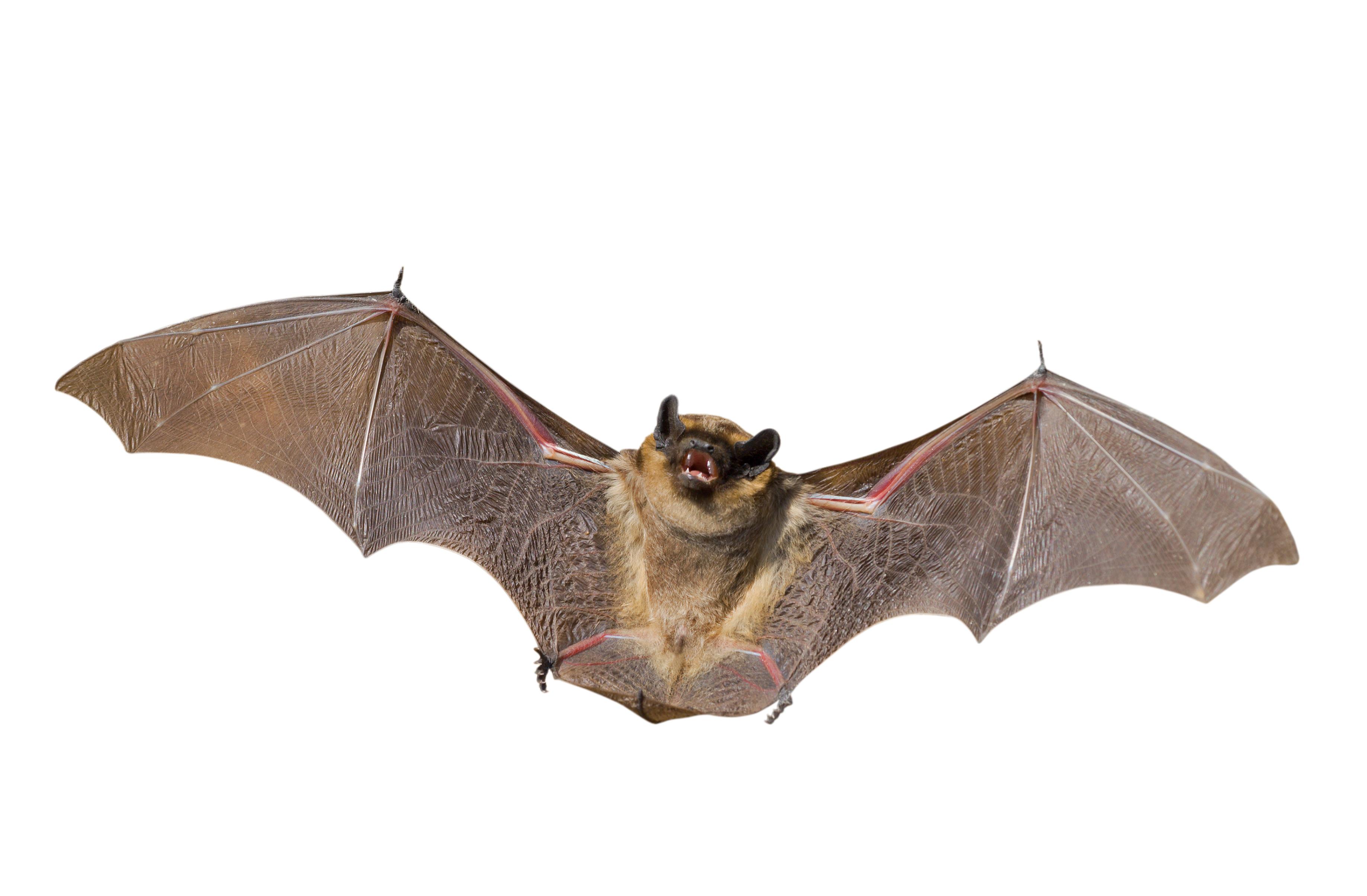 Bat Control Techniqueaterials