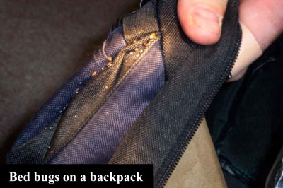 bed bugs on backpack