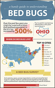 guide to understanding bed bugs