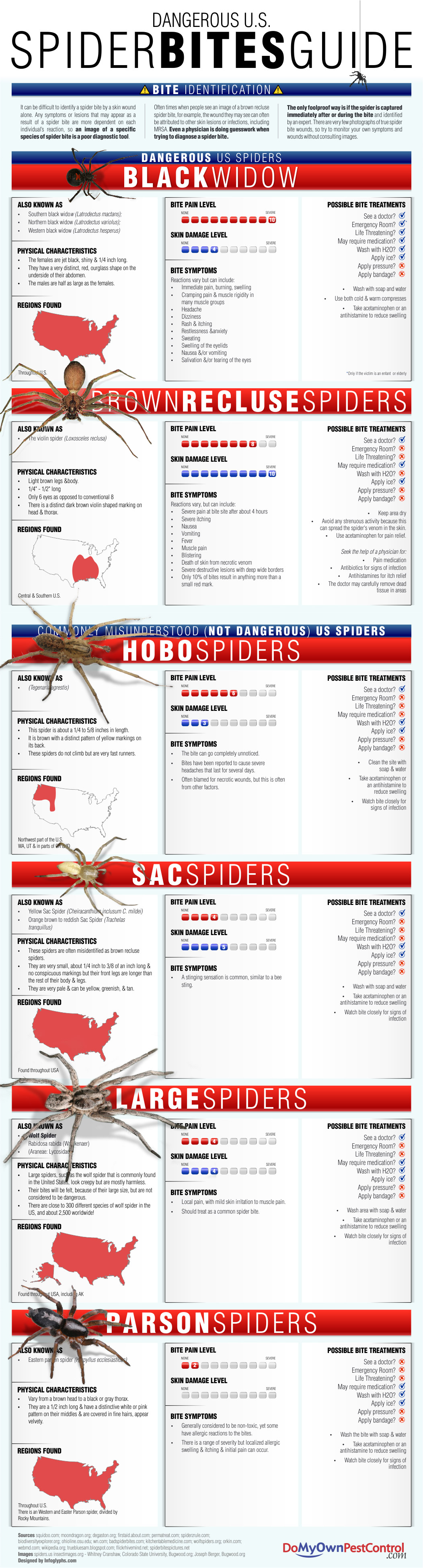 dangerous us spider bites guide