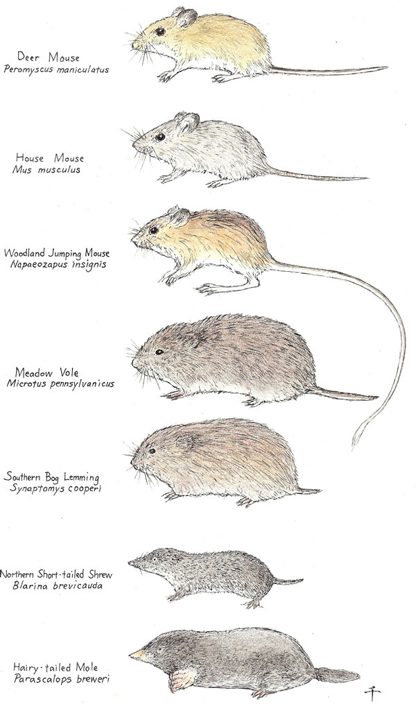 What are mice all about the different types of mice for Different types of houses in usa
