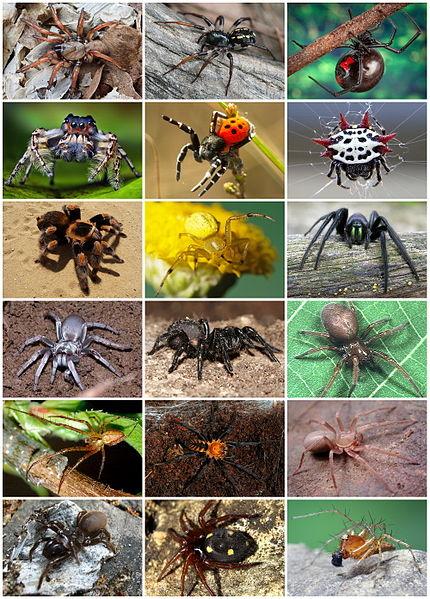 отрава для домашних пауков: