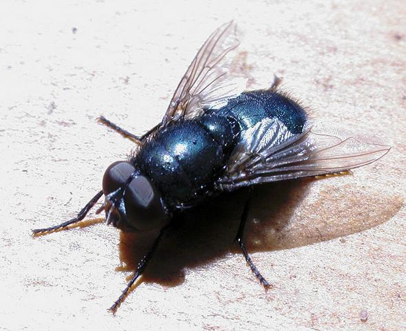 Do It Yourself Home Design: How To Get Rid Of & Keep Flies Away