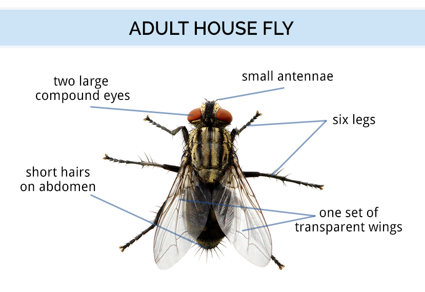 The anatomy of a fly
