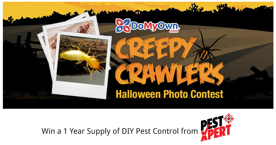 DoMyOwn 2017 Creepy Crawler Halloween Photo Contest