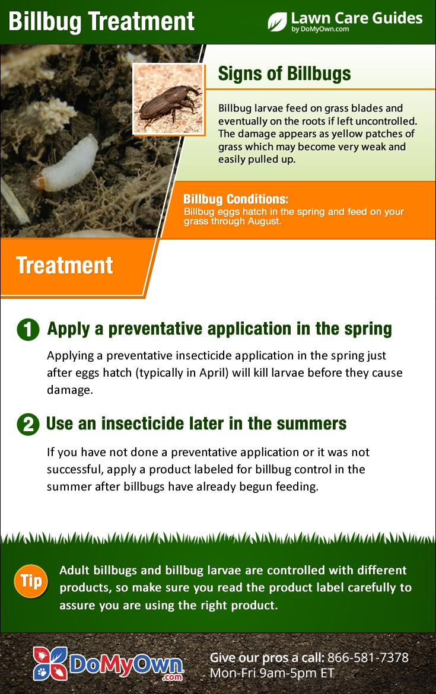 how to get rid of bluegrass billbugs treatment u0026 control