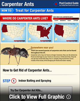 How to Get Rid of & Kill Carpenter Ants - Carpenter Ant Treatment