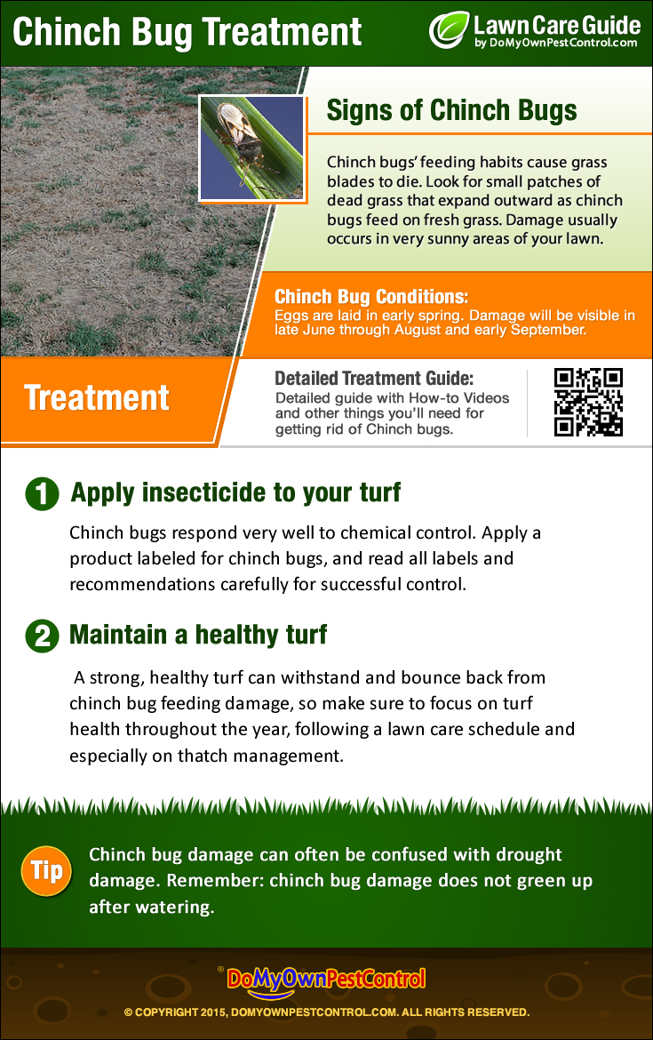 Image Result For How To Treat Chinch Bugs