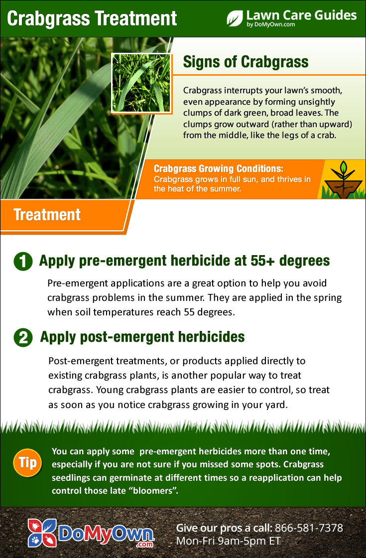 How to get rid of nut grass - Crabgrass Treatment Infographic