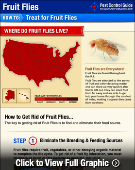 how to get rid of a lot of fruit flies