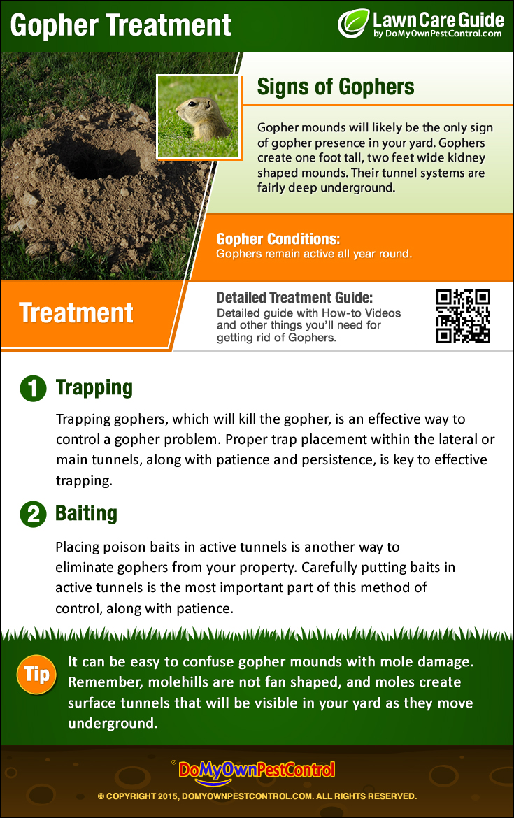 how to get rid of gophers control treatment