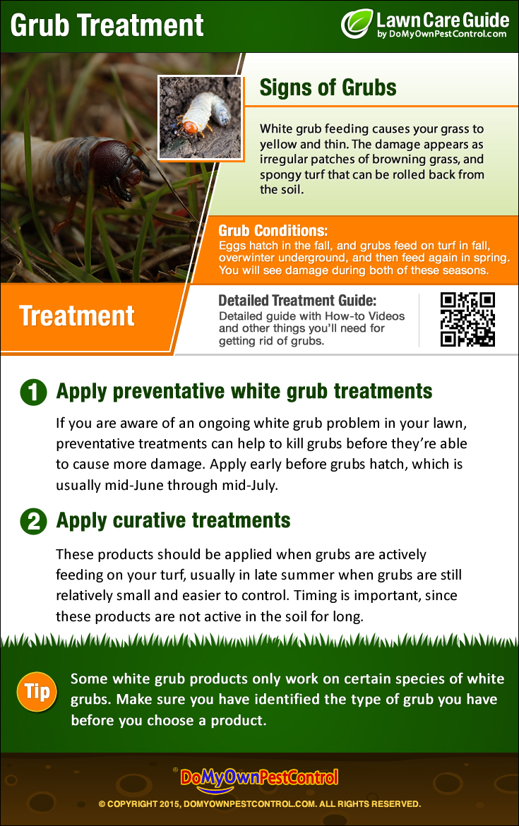 How To Get Rid Of Grubs In Lawn Grub Control Amp Treatment