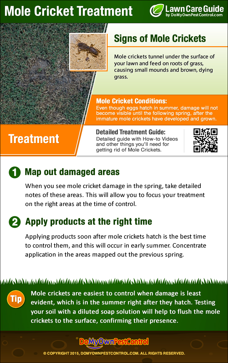 Mole Cricket Treatment Infographic