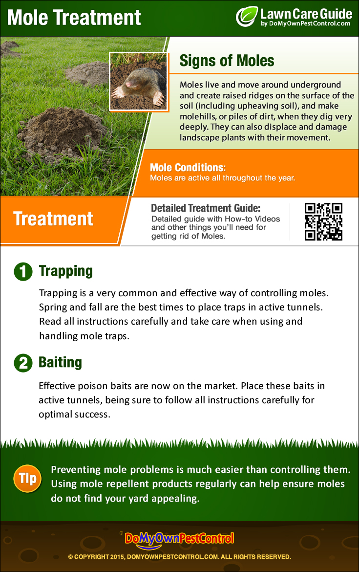How to get rid of ground moles - Mole Treatment Infographic