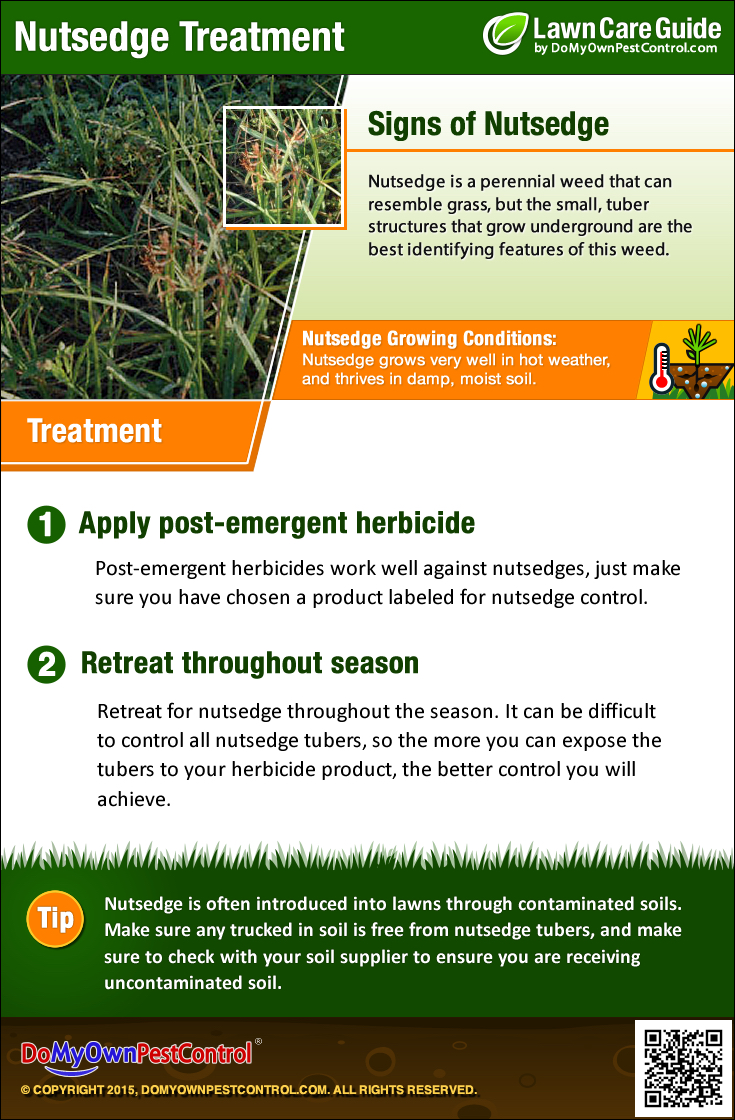 How to get rid of nut grass - Nutsedge Treatment Infographic