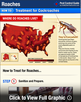 How To Get Rid Of Roaches Kill Roaches DIY Cockroach Treatment - Cockroach us map
