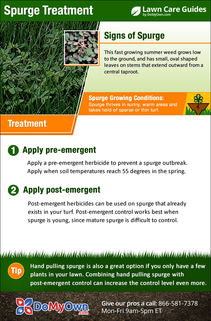 How to get rid of lawn weeds - Spurge Treatment Infographic