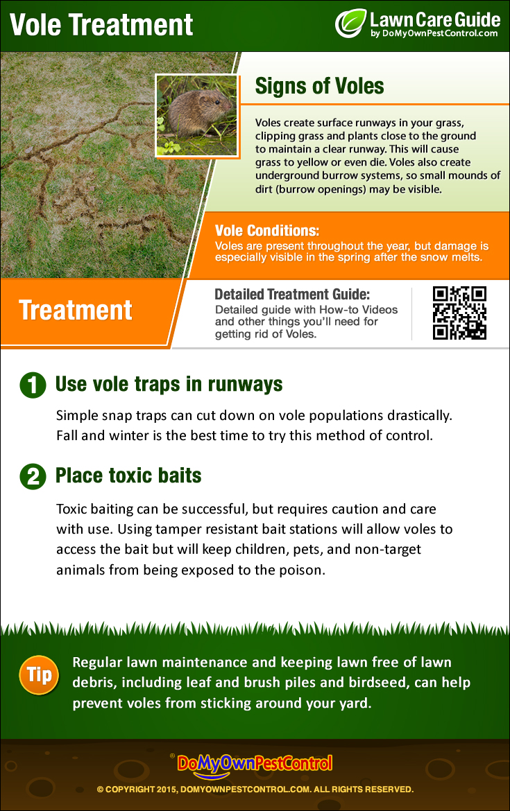How To Get Rid of Voles Vole Control Treatment Removal