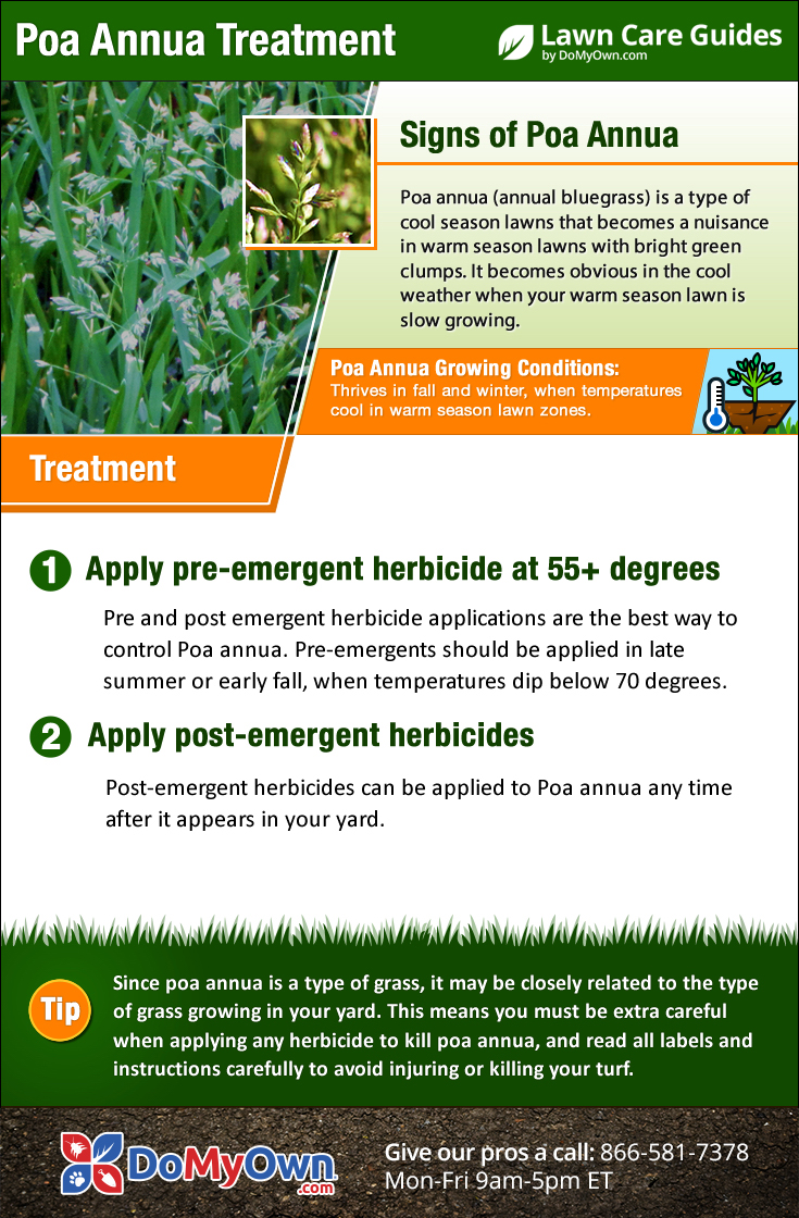 Poa Annua Treatment Infographic