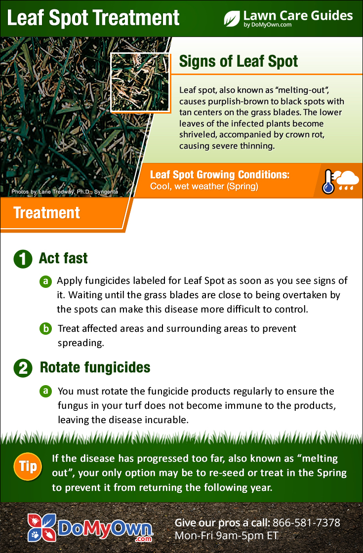 How to Get Rid of Leaf Spot Disease | Leaf Spot Treatment
