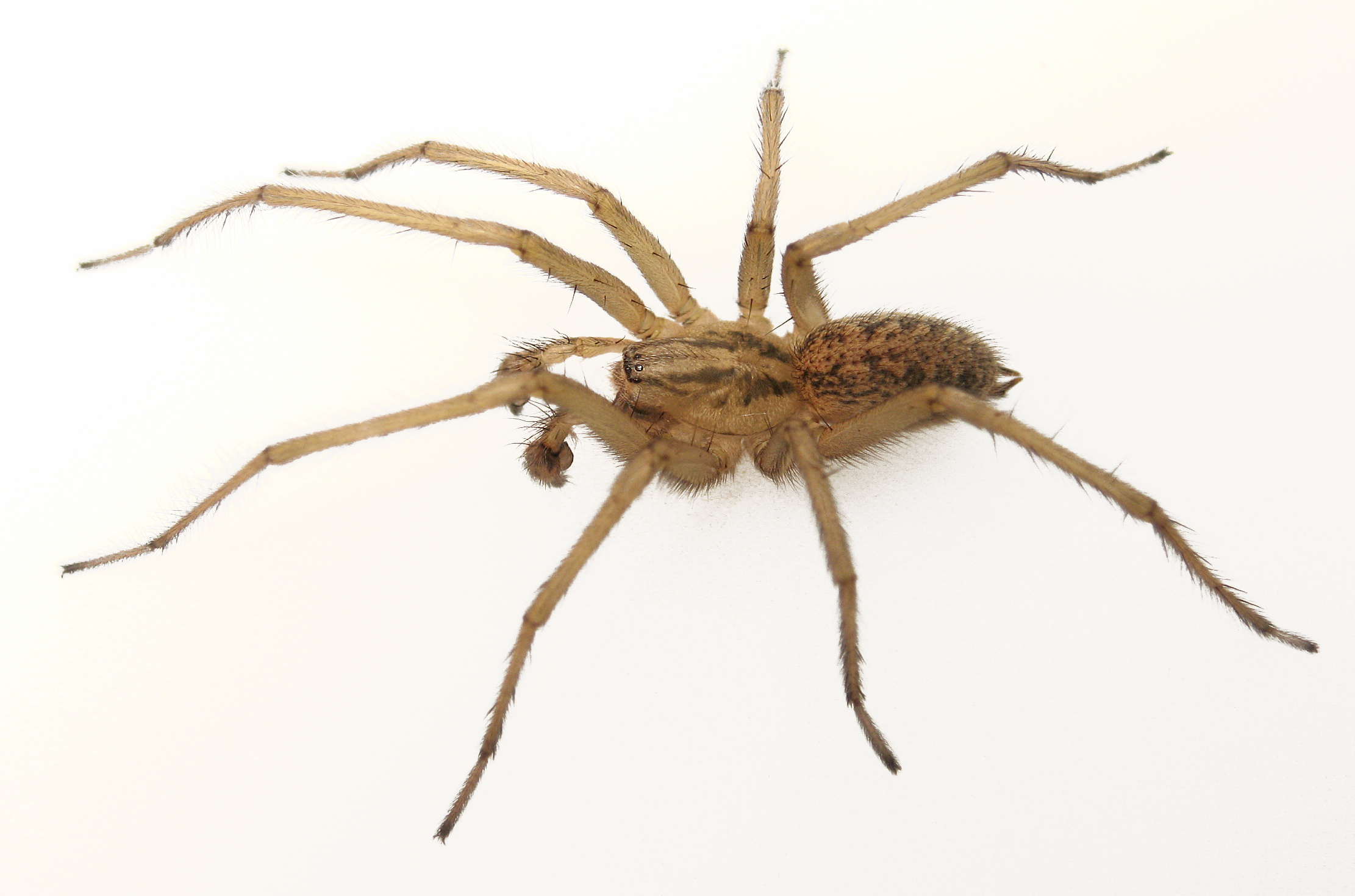 Spider Killer Insecticide Spray Repellent Traps Poison