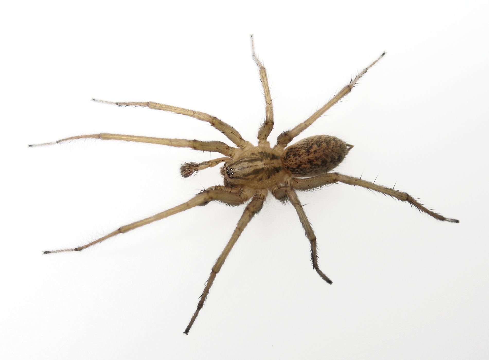 Spider Killer - Insect...