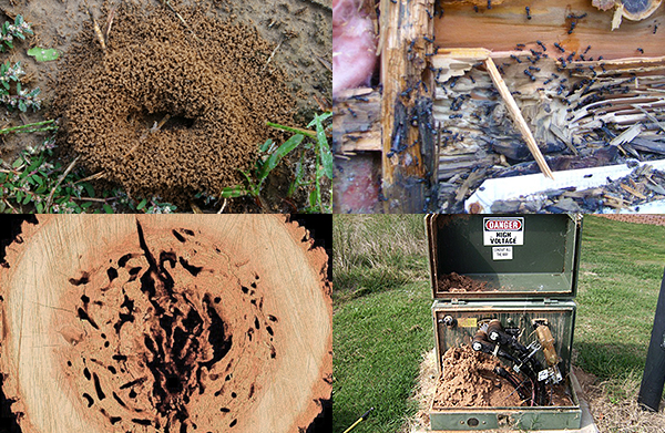 Carpenter Ants Sawdust Piles ~ How to know if you have carpenter ants ant