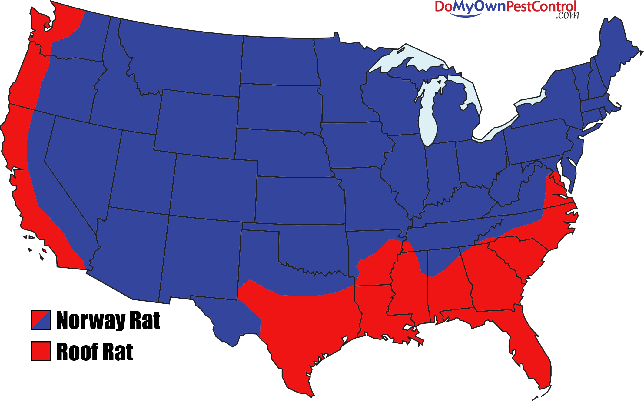 All About Rats Types Of Rats Loctaions And History Rat Facts - Norway on us map