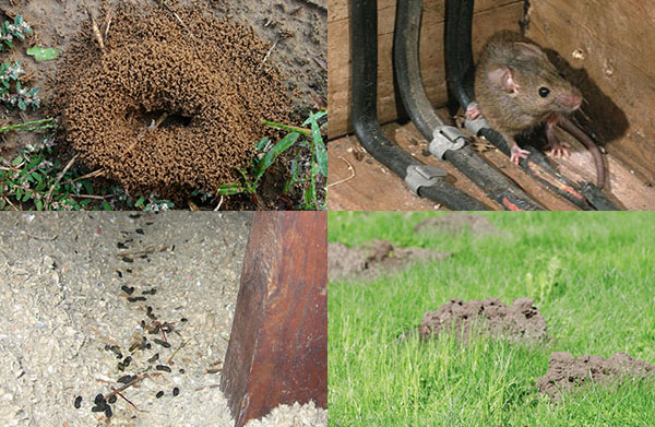 Pest Inspection Do Your Own Home Pest Control Inspection For Free