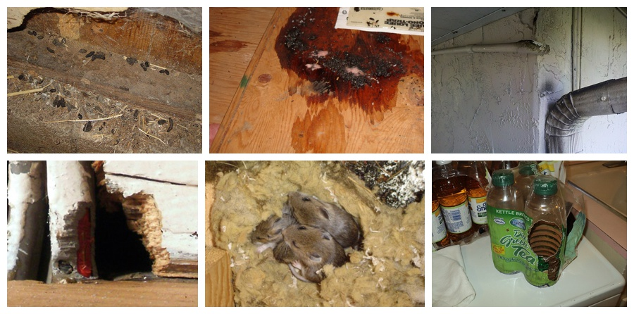 Rat Inspection - Signs of Rats - Where Do Rats Hide