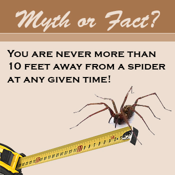 spider myth or fact you are never more than 10 feet from a spider