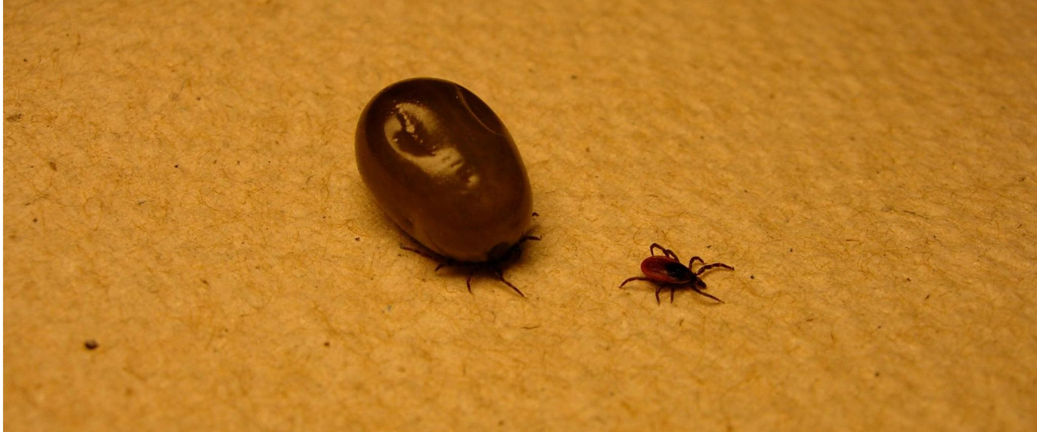 how to detect ticks on humans