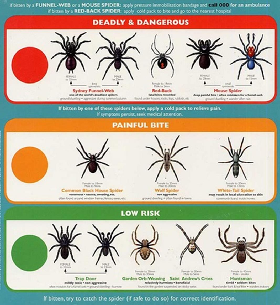 All About Spiders Types Of Spiders Life Cycle Etc - Map of poisonous spiders in the us